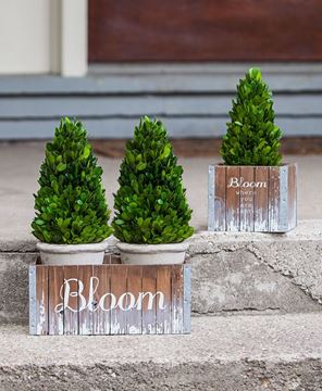 Bloom Where You Are Planted Flower Box