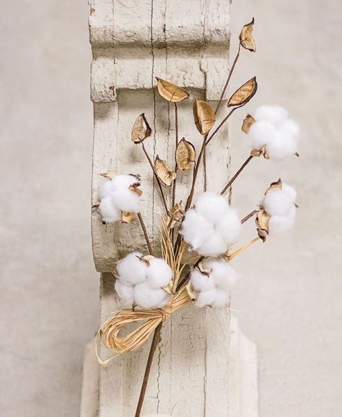 Cotton Pod Stem