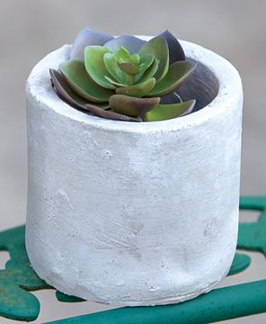 Picture of Classic Cement Planter