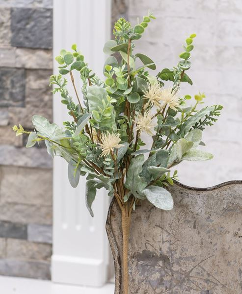 """Picture of Aberdeen Sea Holly Bush, 20"""""""