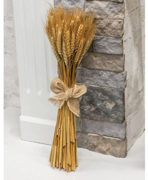 Picture of Wheat Bundle w/ Burlap Bow