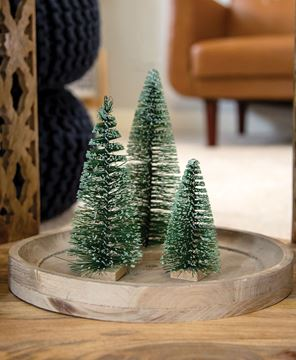 """Picture of Frosty Bottle Brush Tree, 6"""""""